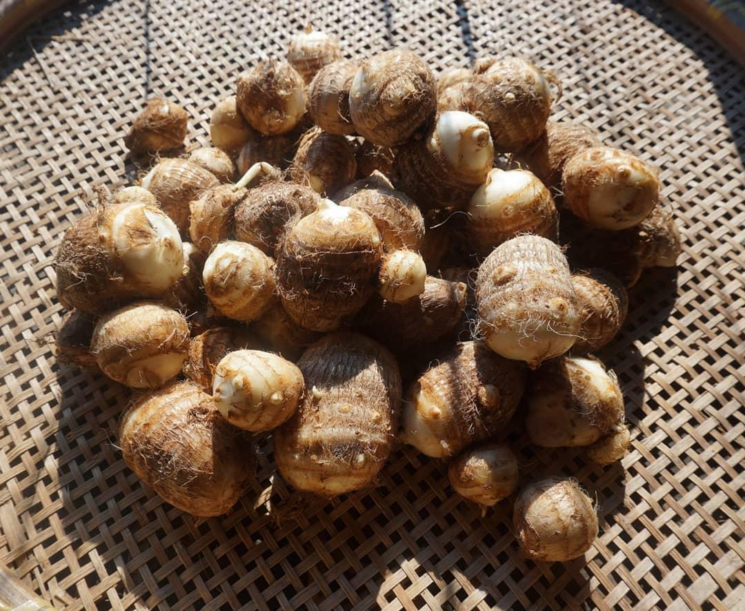 無農薬無肥料のあんがとう農園式「自然栽培」里芋